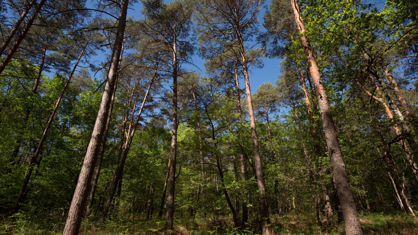 En forêt de Chinon