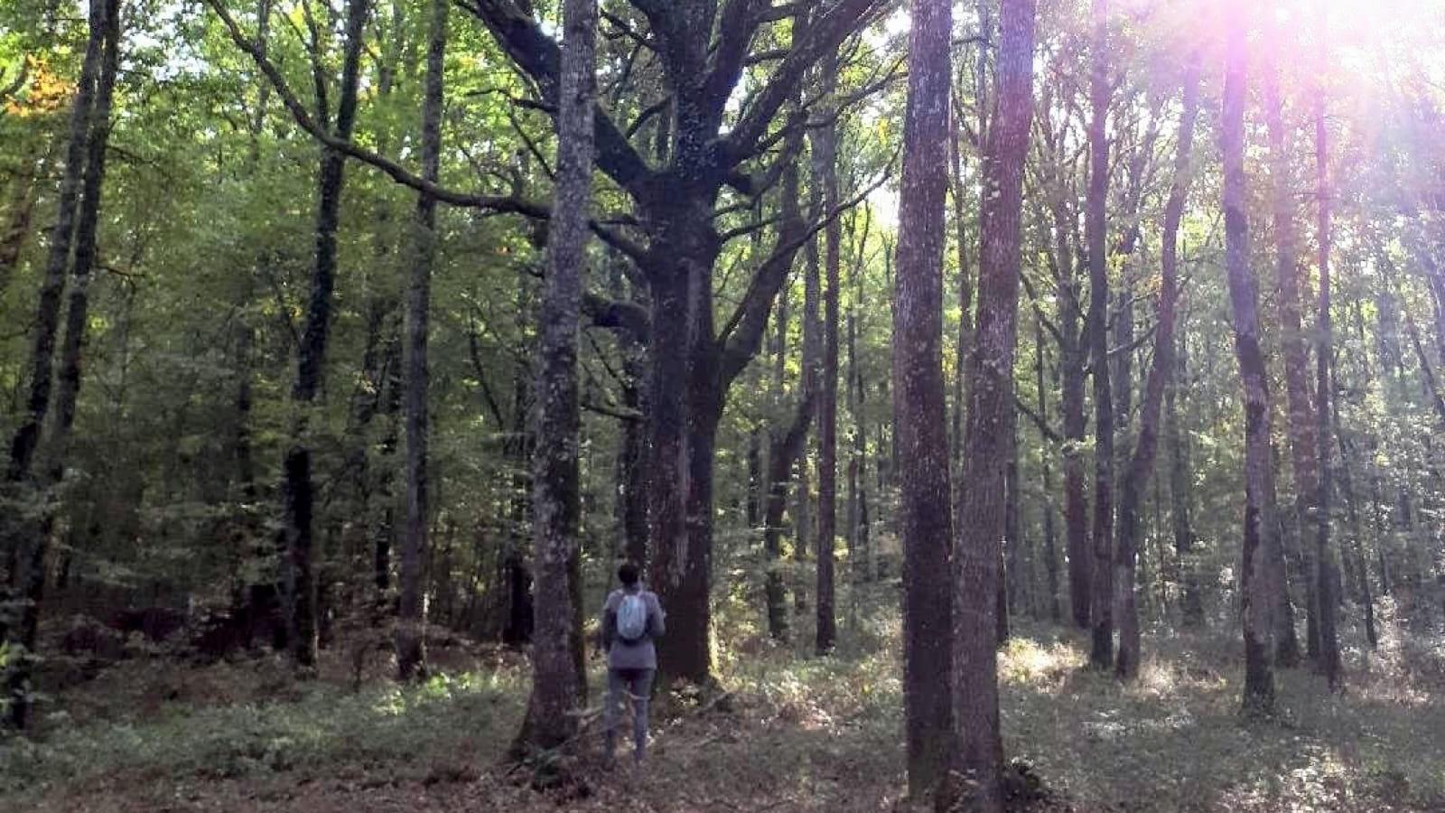 OMTANI Bain de forêt