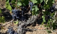ACVL-Chinon-loire-winery-tours--2--2
