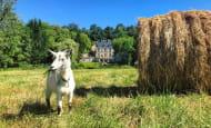 11.Limette la Chèvre