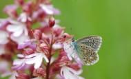 papillons des puys