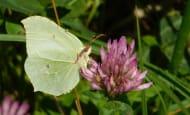 decouverte des papillons