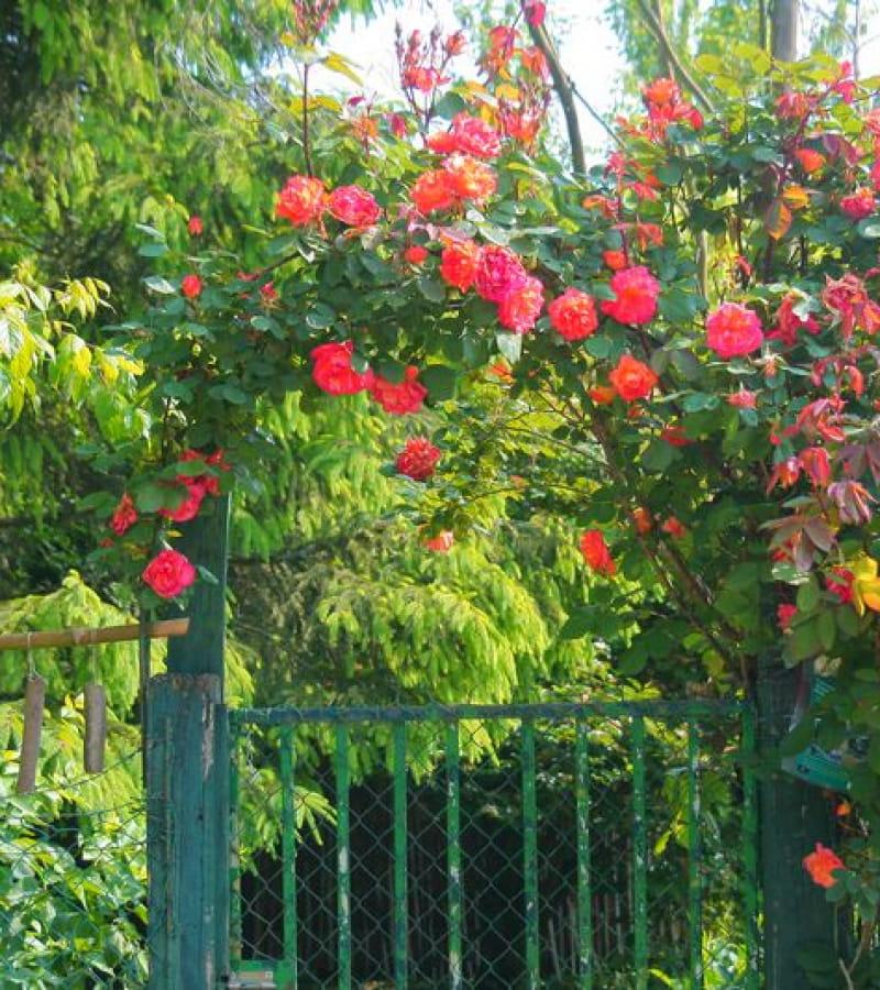 Printemps des Jardins - Chinon