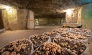 ACVL-SAUMUR-Musee-du-champignon-TrogloNature