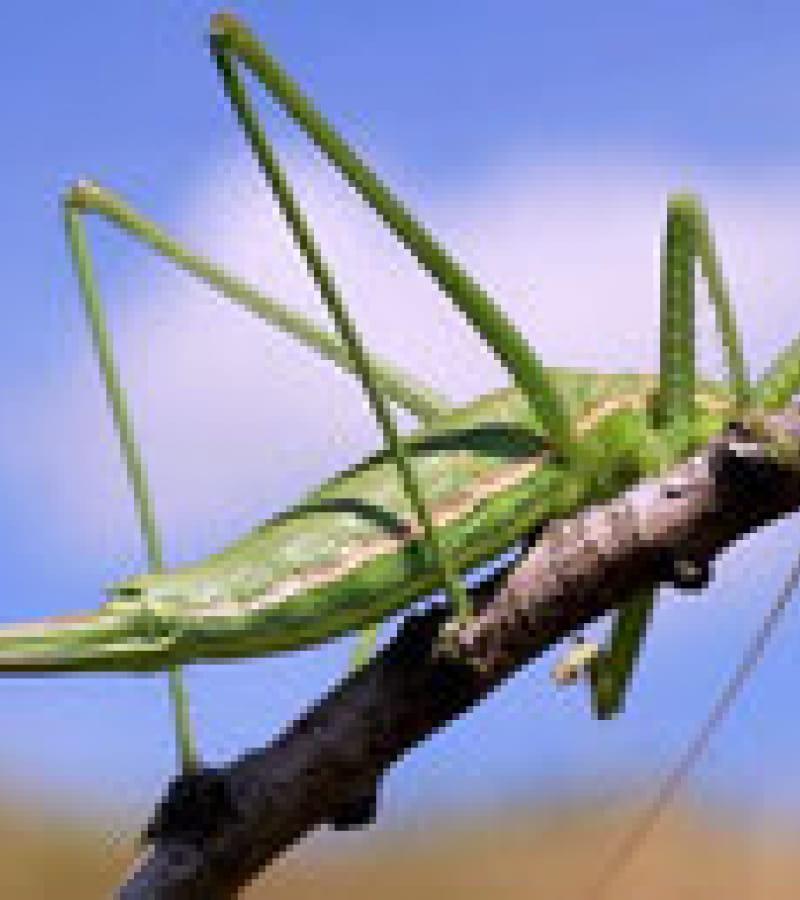 quel est cet insecte