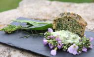 sorties-nature-plantes-sauvages-comestibles-en-touraine-37-val-de-loire-6