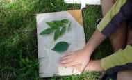 impressions vegetales sur tissu écomusée du véron