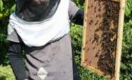 ecomusee-du-veron--BZZZ-aventurez-vous-au-rucher