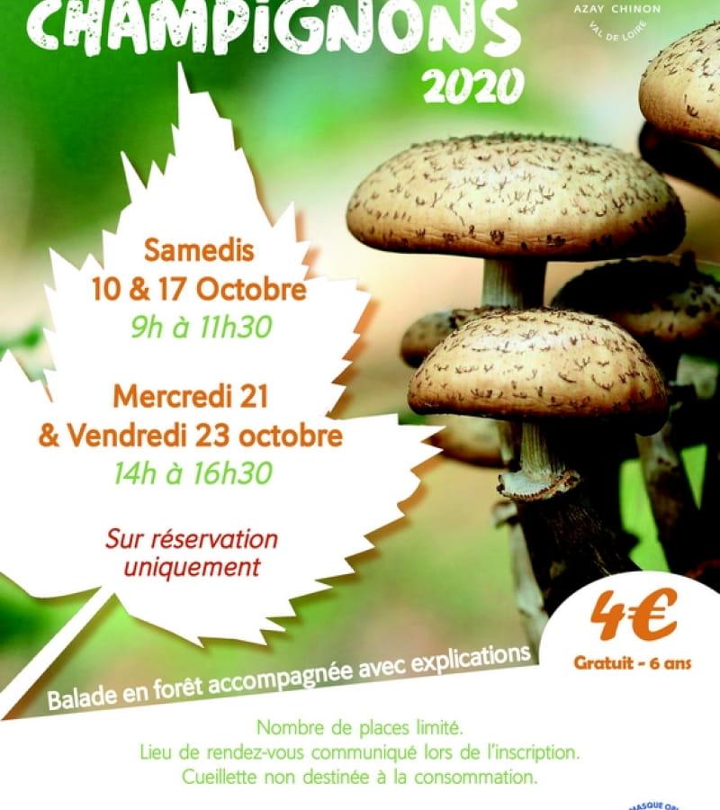 Sorties champignons 2020