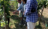 ACVL-Chinon-loire-winery-tours--4-