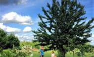 jardin-cueillette-de-cerises