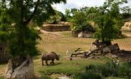 Vallée rhinoceros © Bioparc - L. Joffrion