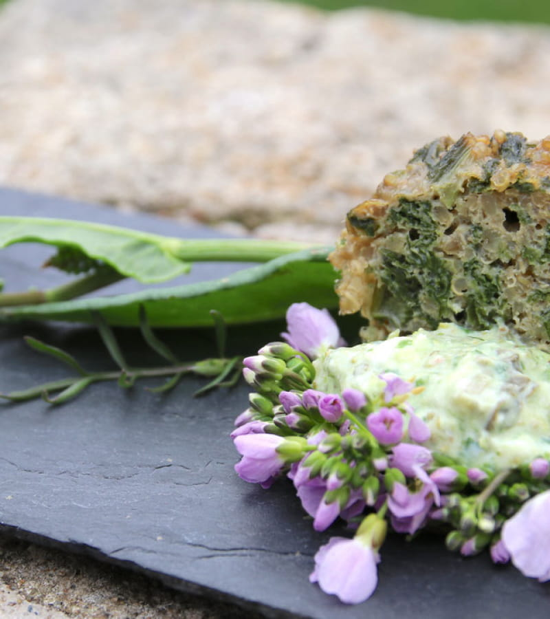 sorties-nature-plantes-sauvages-comestibles-en-touraine-37-val-de-loire-2