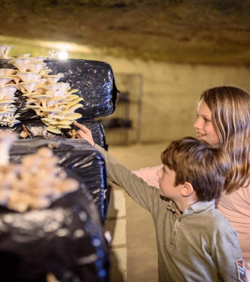 ACVL-SAUMUR-Musee-du-champignon