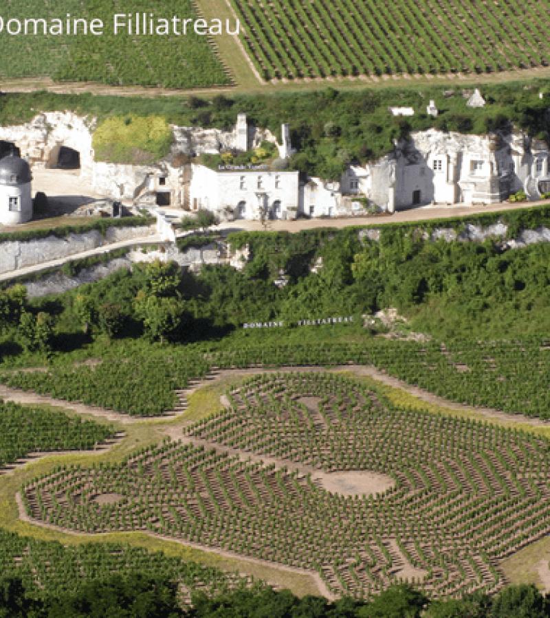 Domaine-Filliatreau-Turquant