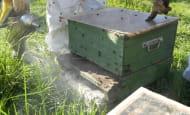 20-juin-rucher