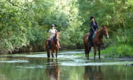 touraine-cheval04