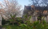cerisier-en-fleur-chinon-1240x930