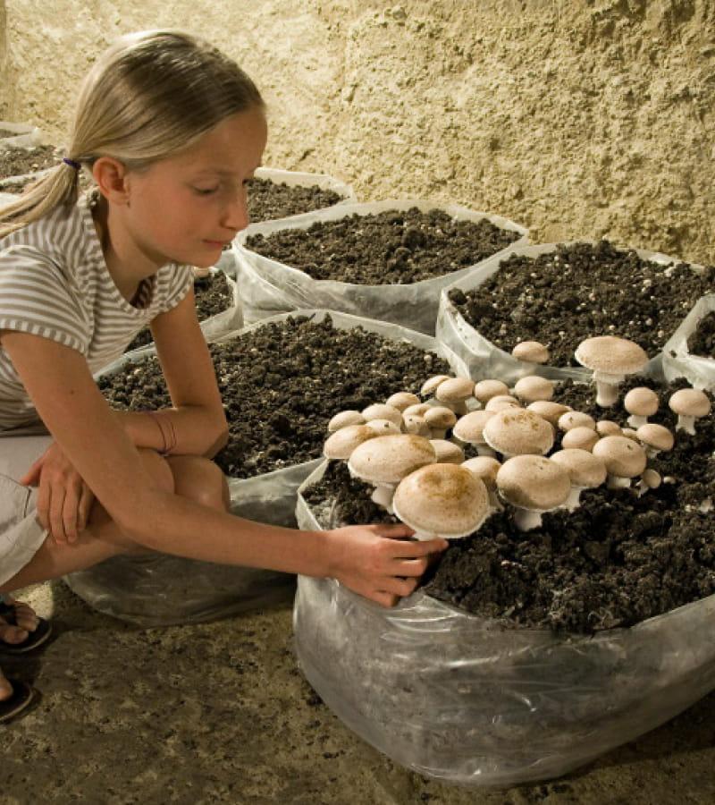 SAUMUR-Musée du champignon