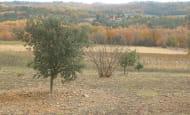 ACVL-Association-Marigny-marmande-marche-aux-truffes