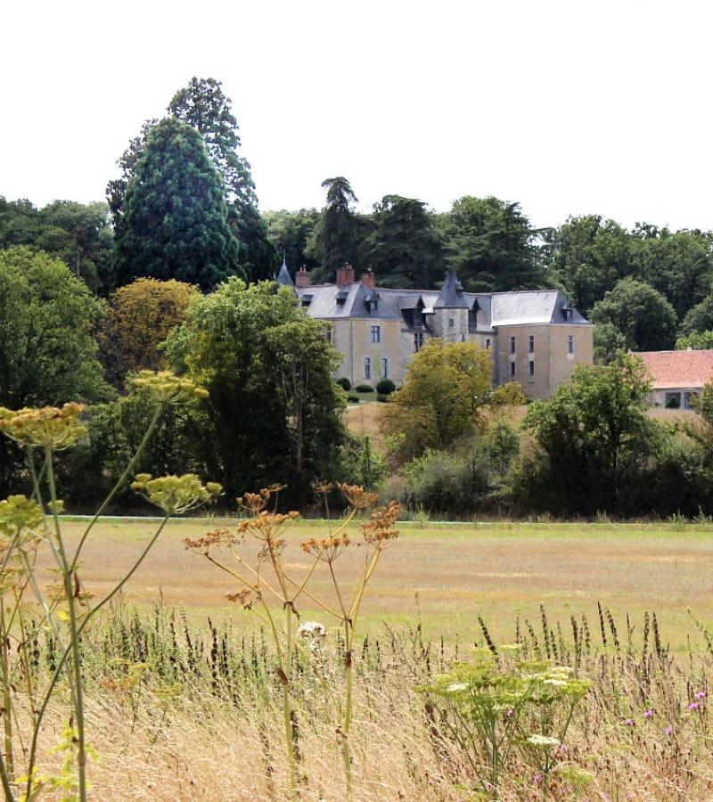 Vue sur le Château de Valesne randonnée avec Musée Balzac Crédit Myriam brunet azaychinonvaldeoire