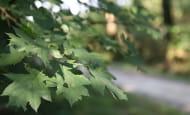 patrimoine-naturel-en-touraine-arbre-foret