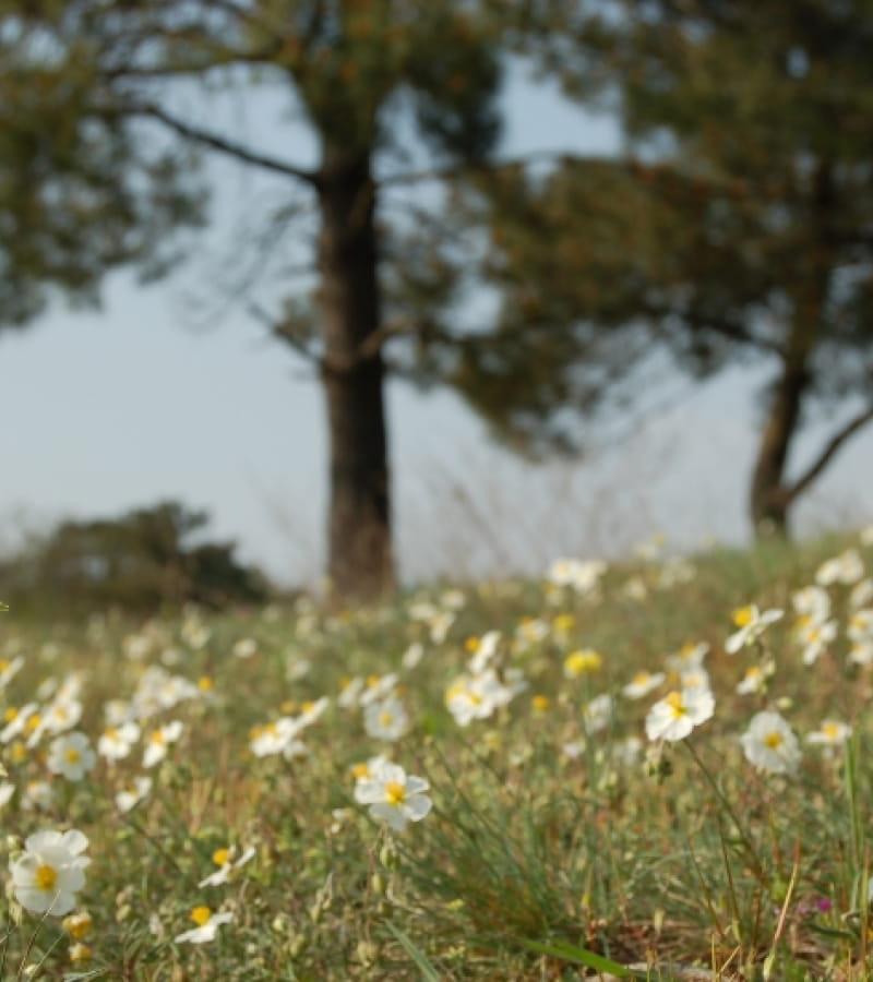 25-avril-decouverte-puys