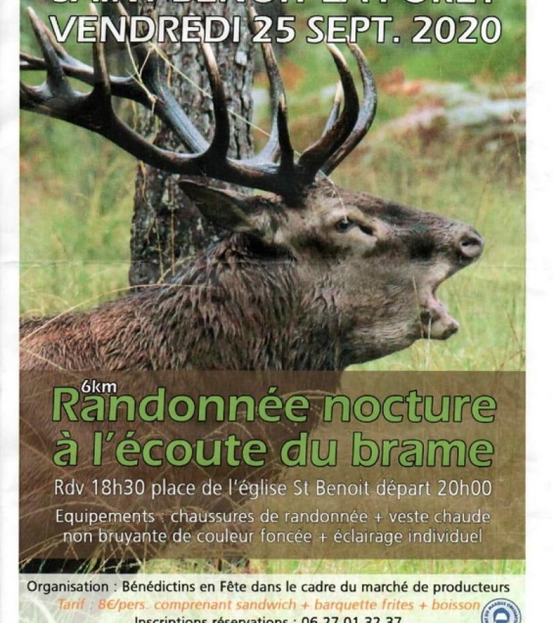Affiche Randonnée Nocturne à l écoute du Brâme 250920